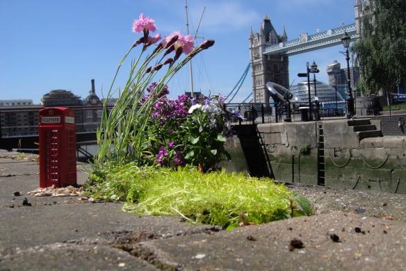 Pothole garden East London Guerilla Gardening Steve Wheen Phone Box
