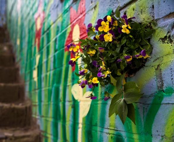 wall garden east london pothole gardener pansies